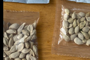 Mysterious Seeds in the Mail: What to Know About the Apparent Reviews Scam