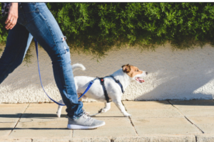 Why Walking Might Be One of the Best Exercises For Health