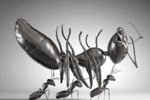 Rise of the zombie ants
